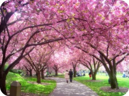 Yang ini Sakura asli :)