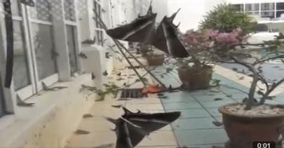 """Serangan """"Kupu-kupu malam"""" di Malaysia"""