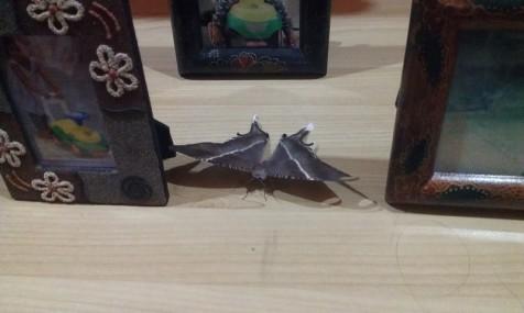 Kupu-kupu yang berhasil masuk ke rumah
