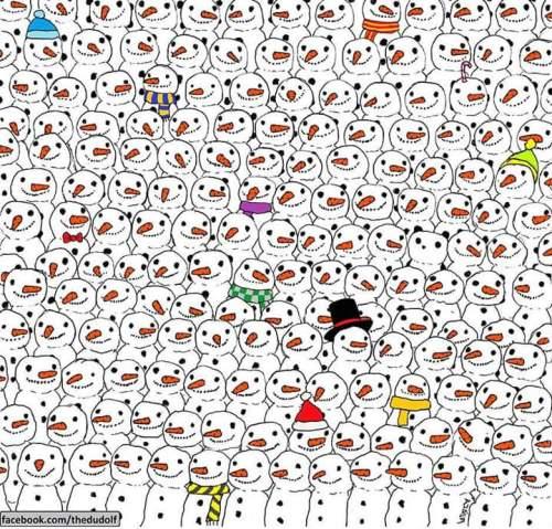 Cari Panda - Gergely Dudás
