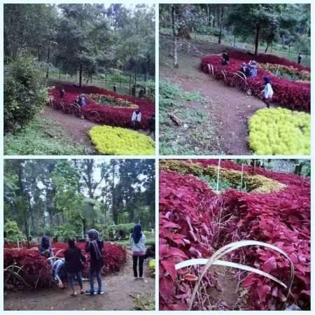 Kondisi Taman Bunga Baturaden
