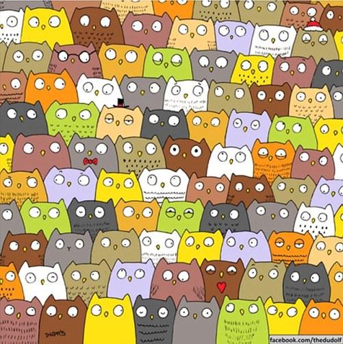 Kucing dan Burung Hantu