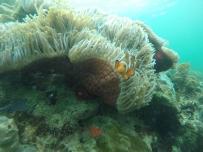 Snorkeling di Pulau Abang