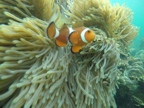 Ada Nemo lagi
