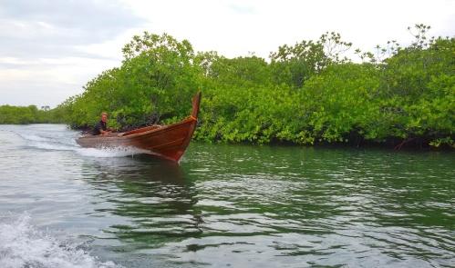Hutan Bakau alami menuju Pulau Abang